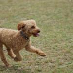 犬の拾い食いの危険と原因!しつけはどうしたらいいの?