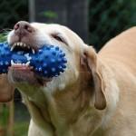 犬の噛み癖の原因は?しつけはどうしたらいいの?