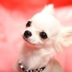 犬にペット保険は必要なの?入っていない場合のリスクは?